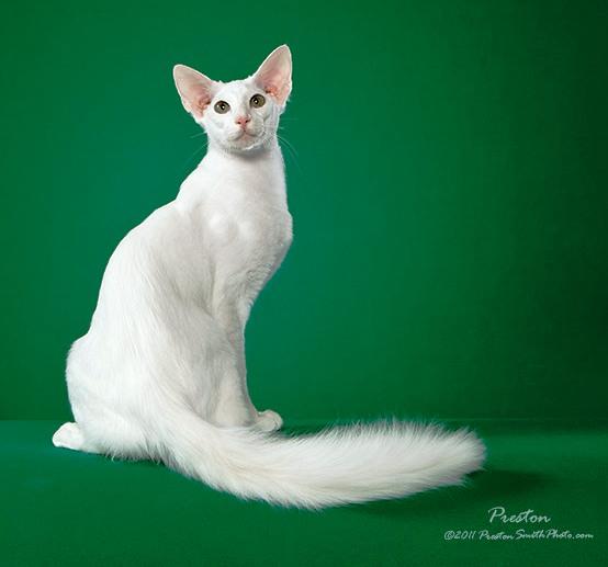 Friemoth Family Cats